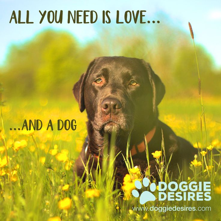 All you need is love..and a dog www.doggiedesires.com