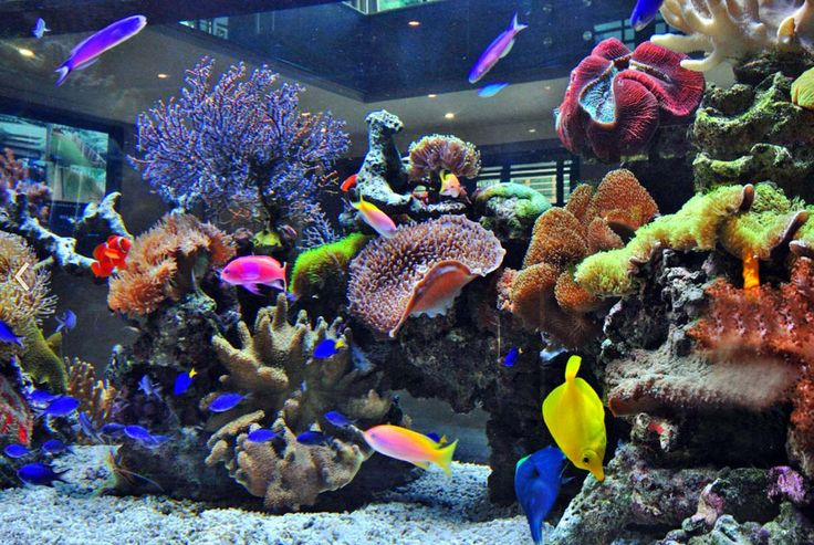 Watching beautiful tropical fish swim in a Reef Aquarium. So relaxing... ッ