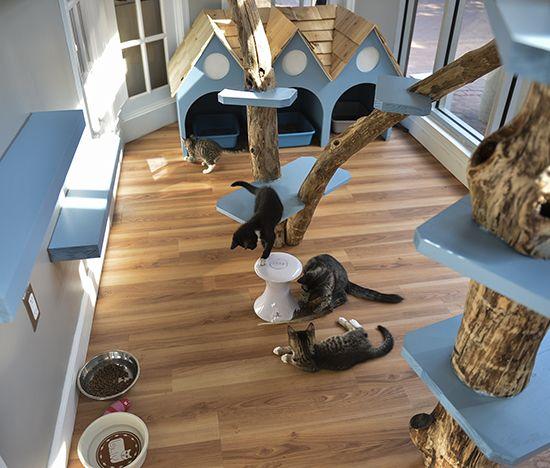 just cats clinic in reston va gets catified playroom designplayroom ideasthe playroomcat roomcat - Cat Room Design Ideas