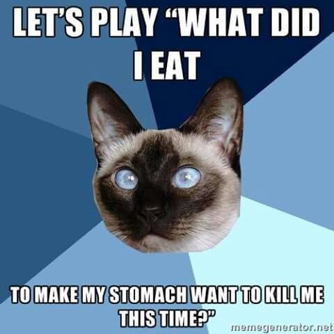 """Chronic Illness Cat. Let's play """"What did I eat to make my stomach want to kill me this time?"""""""