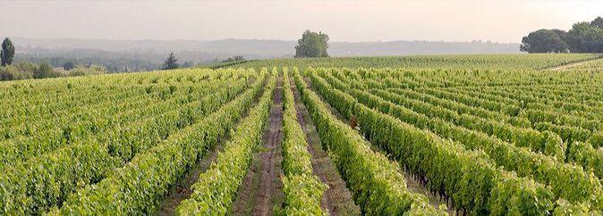 Venez découvrir le vignoble du château d'Arche lors d'une visite guidée, pour cela il vous suffit de réserver votre visite sur Wine Tour Booking