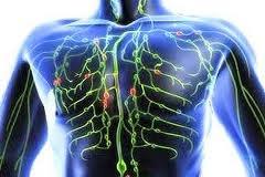 A principal função do sistema linfático é transportar linfa, um líquido claro, incolor, contendo as células brancas do sangue que ajudam a libertar o corpo de toxinas, resíduos e outros materiais indesejados.