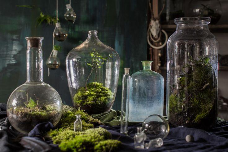 Justyna Stoszek - Forest Forever, photo dinnershow.studio