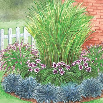 Includes 1 Zebra Grass, 2 Rose Fountain Grass, 3 MacBeth Reblooming Daylily, and 6 Blue Festuca Grass