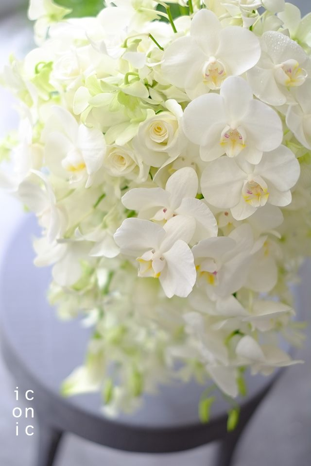 Phalaenopsis,White wedding bouquet,iconicflower
