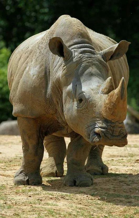 1426 Best Animal Beauty Images On Pinterest Wild Animals