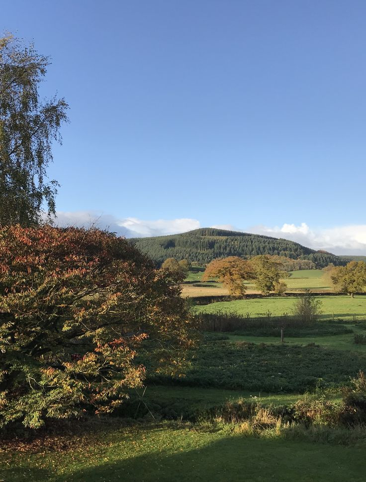 A beautiful November Sunday at our B&B. A great day for wrapping up warm and going for a long walk in the woods, followed by curling up with a good book. #shropshire #autumn #autumncolors #stayandwander