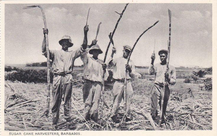 BARBADOS, British West Indies; Sugar Cane Harvesters, 00-10s