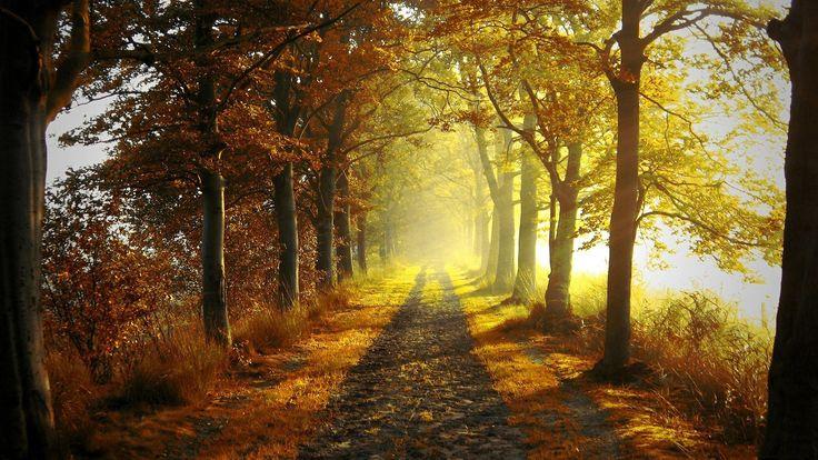 Nice Cesta u šumi Wallpaper HD Pozadine