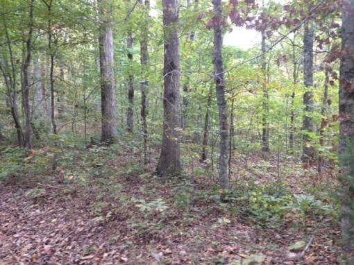 Iron County Missouri Hunting Land For Lease
