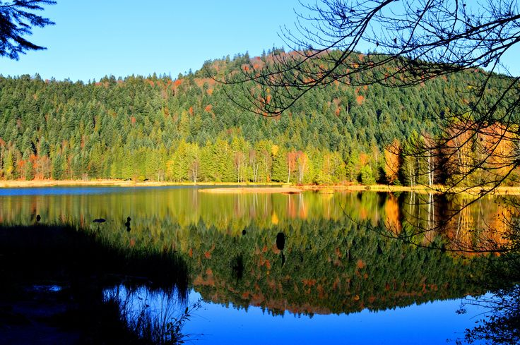 On the lake - Les Vosges (88), France - null