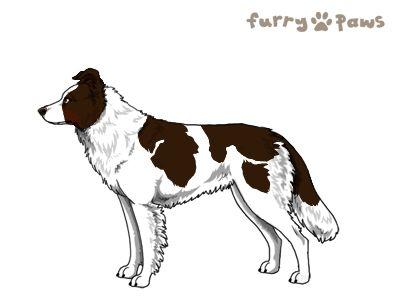 Furry Paws // AH Kip's True Believer - lala agi 3xStm 19.0 - Choc. W/P w.Red Points's Kennel