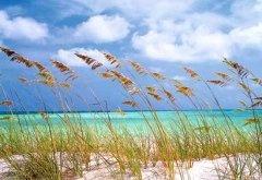 Het wuivende riet in de duinen. Fotowand Ocean Breeze