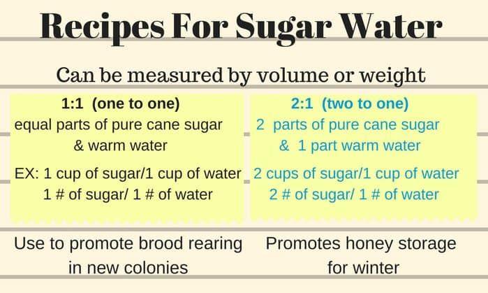 Feeding Bees Sugar Water How Why Feeding Bees Sugar Water For Bees Bee Food