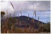 Bookphoto.re - Sur la route du volcan