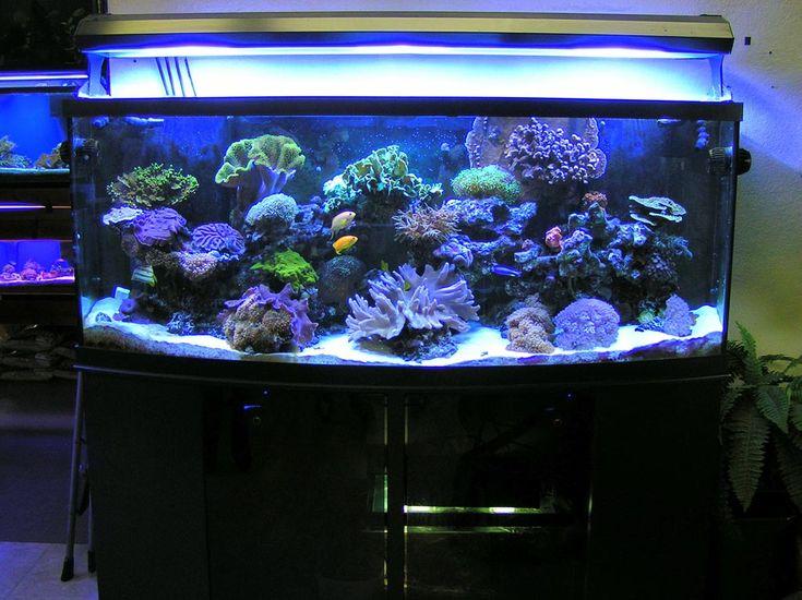 88 best aquarium plants images on pinterest aquarium for Discount aquarium fish and reef