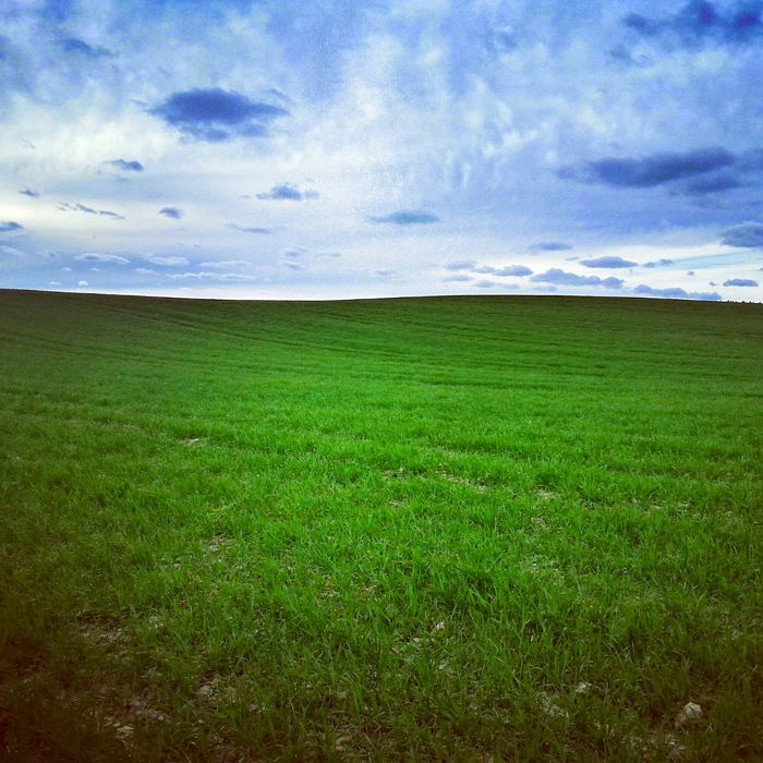 Tapeta Windows XP