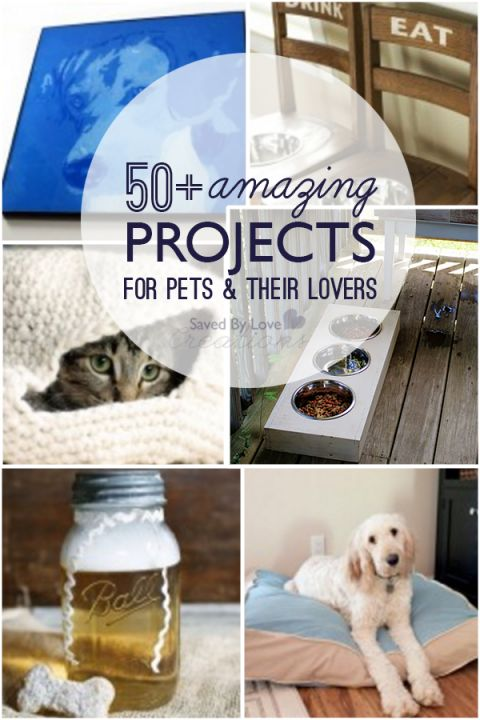 Over 50 Projects to Make for Pets and their Owners