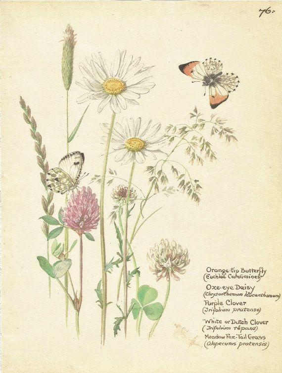 Flower Print - Daisy - Orange Butterfly Print - Vintage Botanical ...