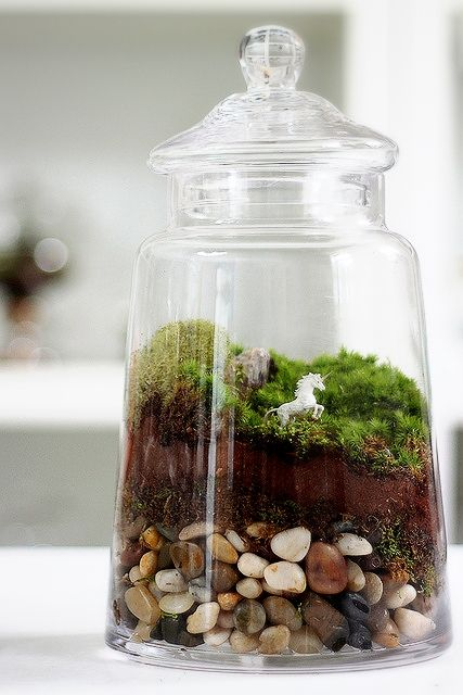 [Gardening] 유리병 속 작은 생태계 - 테라리움 (Terrarium) : 네이버 블로그