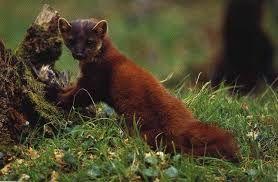 Risultati immagini per piante e animali del parco nazionale d'abruzzo
