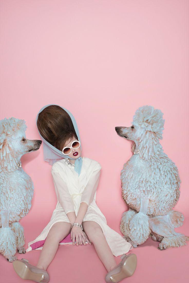 Caniche pop ! Fashion poodle