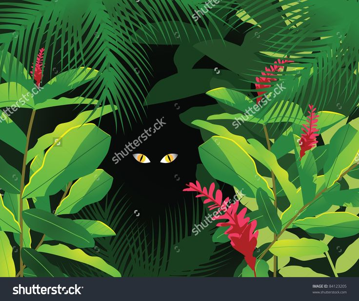 jungle frame stock photos images amp pictures shutterstock