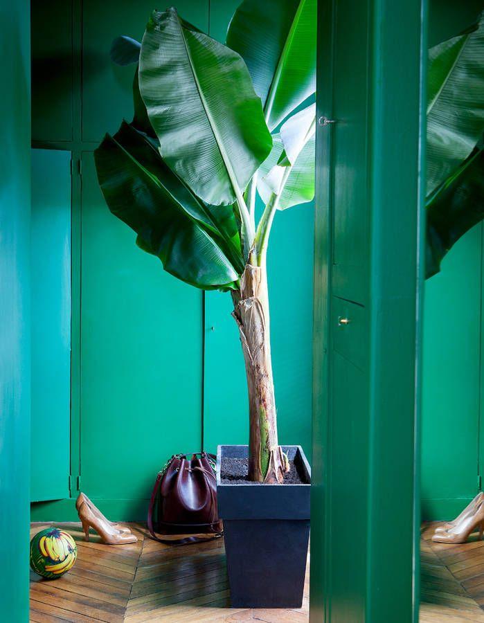 17 meilleures id es propos de bananier interieur sur pinterest planter bananier le bananier. Black Bedroom Furniture Sets. Home Design Ideas