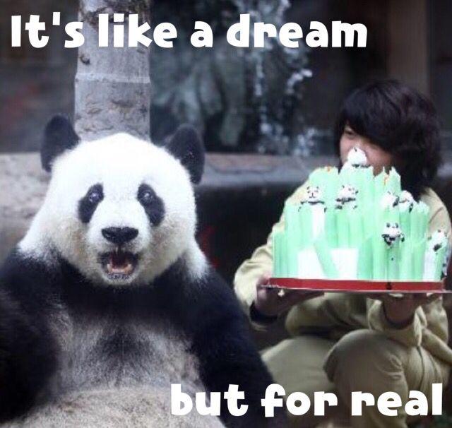 8f6610eed7cab3c9424ebd29a7350443 panda birthday birthday memes pin by stephanie monroe on wild life pinterest wild life and panda