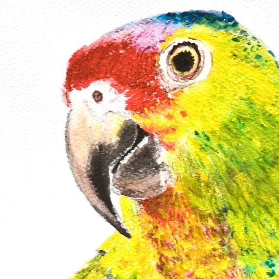 Parrot painting. I wish i could make one of these
