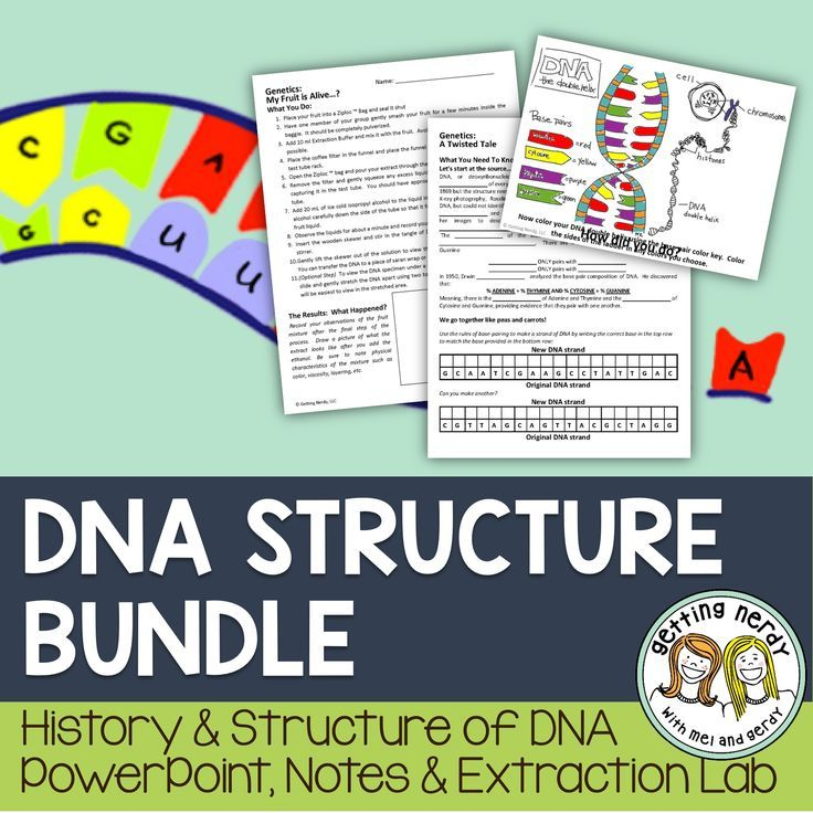 Best 406 genetics activities images on pinterest dna discovery and structure genetics powerpoint and handouts fandeluxe Image collections