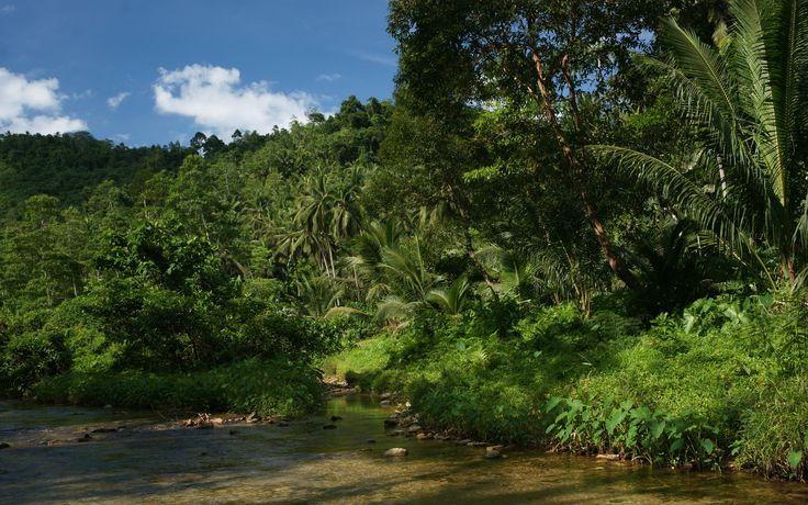 jungle-river-nature-dsc04110.jpg (1920×1200)