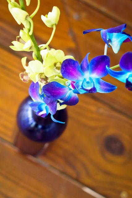 Best ideas about blue orchid centerpieces on pinterest