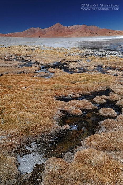 Altiplano Andino Catamarca Argentina