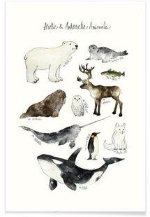Arctic and Antarctic Animals - Amy Hamilton - Premium Poster