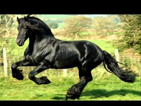 sir frederick black stallion friesian horse | Pferde oder Ponys – was denn nun? - Worldnews.com