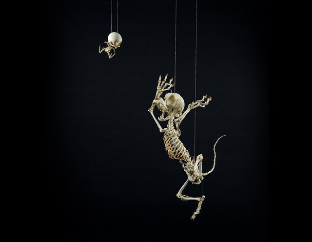 """""""Leiothrix Lutea Animatus & Felis Animatus"""" (Tweety Bird and Sylvester the Cat) - Korean artist and sculptor Hyungkoo Lee has created Animatus, an impressive series featuring realistic skeletons of Looney Tunes and other classic cartoon characters. Hyungkoo created each skeleton by sculpting resin on an aluminum structure."""