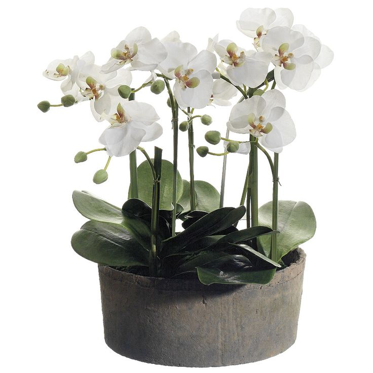 Tori Home Phalaenopsis Orchid Plant in Clay Pot