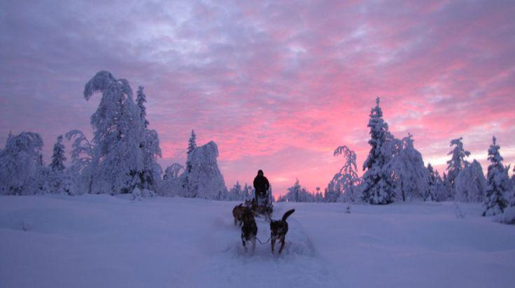 Husky Favorite -Rovaniemi, Lapland, Finland