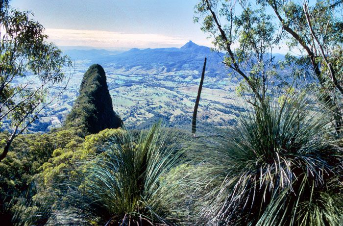 The Pinnacle, Border Ranges National Park | NSW National Parks