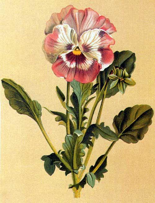 LOVE Botanical Illustrations!