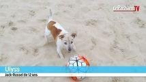 Ulyss, le petit chien qui sait jouer au foot