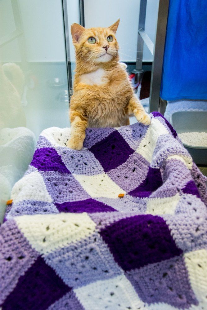 Knitting Kittens Battersea : Best loveknitting battersea dogs cats home images