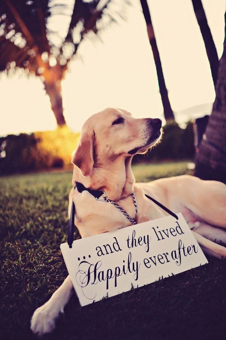 Incorporate your dog into your wedding day with this adorable sign '...and they lived happily ever after'. For more inspiration visit www.weddingsite.co.uk