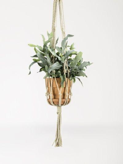 Varens, De krulvaren (Nephrolepis) zuivert namelijk de lucht en zorgt voor een perfecte luchtvochtigheid. De Phlebodium en Asplenium: schone lucht voor je.  Mooiwatplantendoen.nl