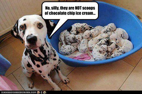 OOOOO yummmy ! chocolate chip ice cream!!!