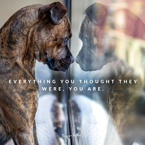 Everything you thought they were, you are.  - Byron Katie Can you see your reflection? thework.com