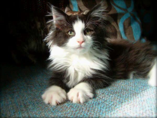 (*^^*) pretty kitty!