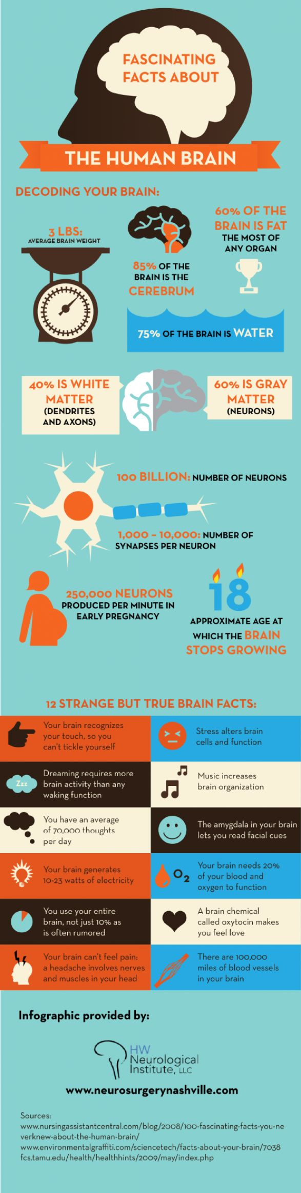 Fascinating Facts About the Human Brain