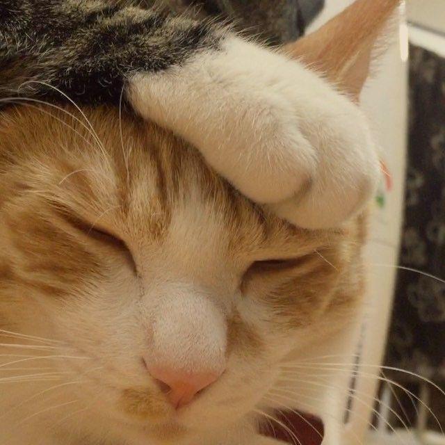 💬 . #cat